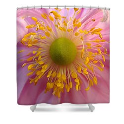 Windflower Shower Curtain by Cheryl Hoyle