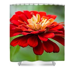 Bursts Of Color Shower Curtain