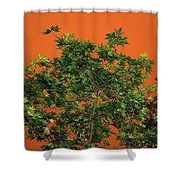 Bushfire Skies Shower Curtain by Kaye Menner