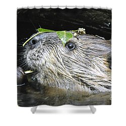 Busy Beaver Shower Curtain