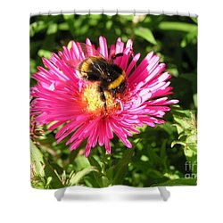 Busy Bee Shower Curtain by Bev Conover