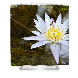 Shower Curtain featuring the photograph Busy Bee by Dave Files