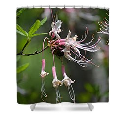 Shower Curtain featuring the photograph Busy Bee by Tara Potts