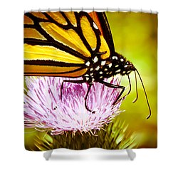 Busy Butterfly Shower Curtain by Cheryl Baxter