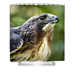 Buteo Jamaicensis Shower Curtain by Christina Rollo