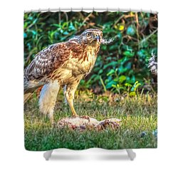 Shower Curtain featuring the photograph Buteo Jamaicensis by Rob Sellers