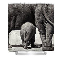 Butt Butt Butt Shower Curtain by Joan Carroll