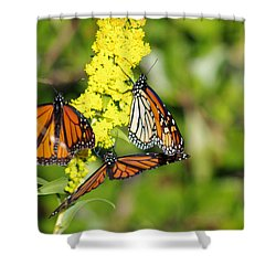 Butterflies Abound Shower Curtain