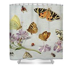 Butterflies Shower Curtain by Jan Van Kessel