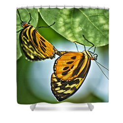 Shower Curtain featuring the photograph Butterflies Mating by Thomas Woolworth