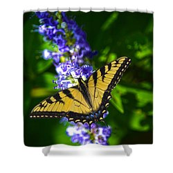 Butterflly Bush And The Swallowtail Shower Curtain by Sandi OReilly