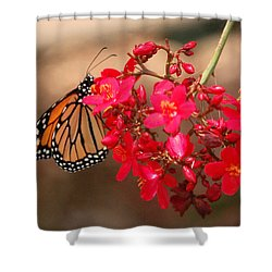 Shower Curtain featuring the photograph Butterfly 1 by Leticia Latocki