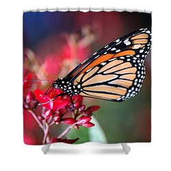 Shower Curtain featuring the photograph Butterfly 2 by Leticia Latocki