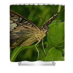 Shower Curtain featuring the photograph Butterfly 2 by Olga Hamilton