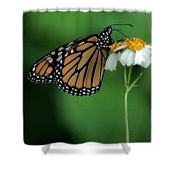 Shower Curtain featuring the photograph Butterfly 3 by Leticia Latocki