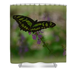 Shower Curtain featuring the photograph Butterfly 4 by Leticia Latocki