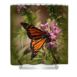 Shower Curtain featuring the photograph Butterfly 5 by Leticia Latocki