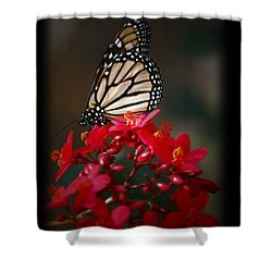 Shower Curtain featuring the photograph Butterfly 6 by Leticia Latocki