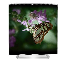 Shower Curtain featuring the photograph Butterfly 7 by Leticia Latocki