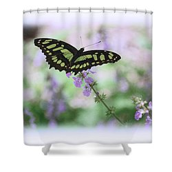 Shower Curtain featuring the photograph Butterfly 8 by Leticia Latocki