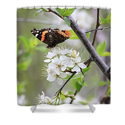 Shower Curtain featuring the photograph Butterfly And Apple Blossoms by Penny Meyers