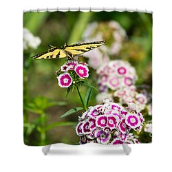 Butterfly And Bloom - Beautiful Spring Flowers And Tiger Swallowtail Butterfly. Shower Curtain by Jamie Pham