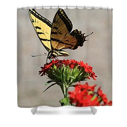 Butterfly And Maltese Cross 1 Shower Curtain by Aaron Aldrich