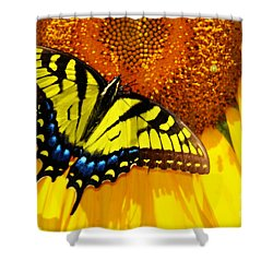 Butterfly And The Sunflower Shower Curtain