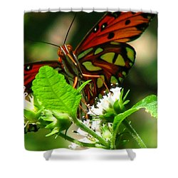 Butterfly Art Shower Curtain by Greg Patzer