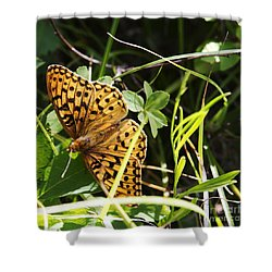Butterfly At Signal Mountain Shower Curtain by Belinda Greb