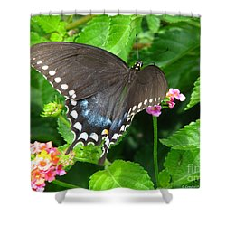 Butterfly Ballot Shower Curtain
