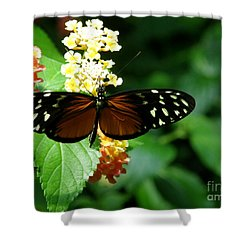 Butterfly Shower Curtain by Bev Conover