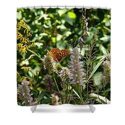 Butterfly Buffet Shower Curtain