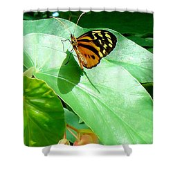Shower Curtain featuring the photograph Butterfly Chasing Shadow by Janette Boyd