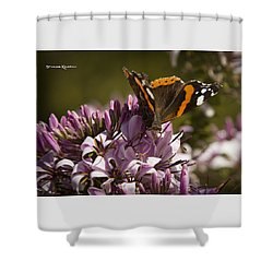 Shower Curtain featuring the photograph Butterfly Close Up by Stwayne Keubrick