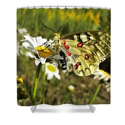 Butterfly Enjoying The Day Shower Curtain