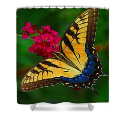 Shower Curtain featuring the photograph Butterfly by Geraldine DeBoer