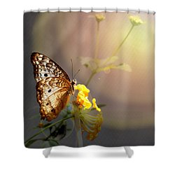 Butterfly Glow Shower Curtain
