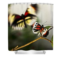Butterfly In Flight Shower Curtain