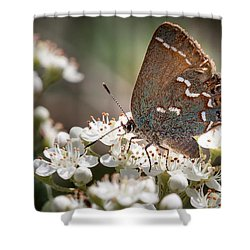 Butterfly In The Garden Shower Curtain