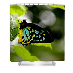 Butterfly Iv Shower Curtain by Tom Prendergast