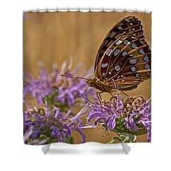 Butterfly On Bee Balm Shower Curtain by Shelly Gunderson