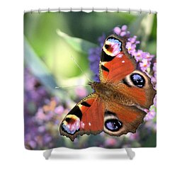 Butterfly On Buddleia Shower Curtain by Gordon Auld