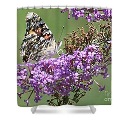 Shower Curtain featuring the photograph Painted Lady Butterfly by Eunice Miller