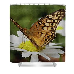 Butterfly On Daisy Shower Curtain