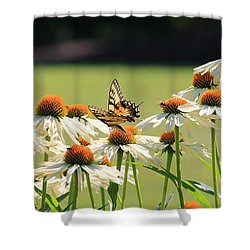 Butterfly On Echinacea Shower Curtain