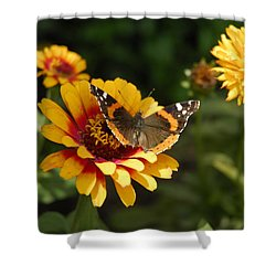 Butterfly On Flower Shower Curtain by Charles Beeler