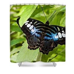 Butterfly On Leaf   Shower Curtain by Lars Lentz
