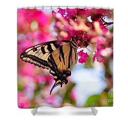 Butterfly On The Crepe Myrtle. Shower Curtain