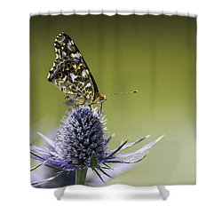 Butterfly On Thistle Shower Curtain by Peter v Quenter